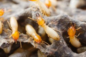 San Antonio Exterminators - Pest Control